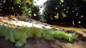 Borboletas Amarelas Lindas, Como O Mundo Animal É Maravilhoso!
