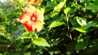 Borboletas Voando No Jardim, Uma Das Mais Belas Imagens Da Natureza!