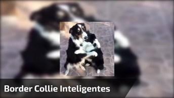 Border Collie A Raça Mais Inteligente E Fofa De Cachorro, Olha Só Que Abraço!