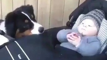Border Collie Cumprimentando Bebê, Olha Só Que Fofura De Cachorrinho!