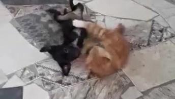 Briga De Gatinho E Cachorrinho Ninguém Pode Intrometer, Pois É Fofo Demais!