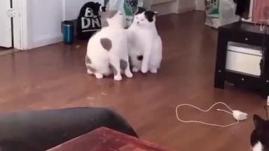 Briga De Gatos Mais Delicada Que Você Já Viu Na Vida, Olha Só Que Fofura!