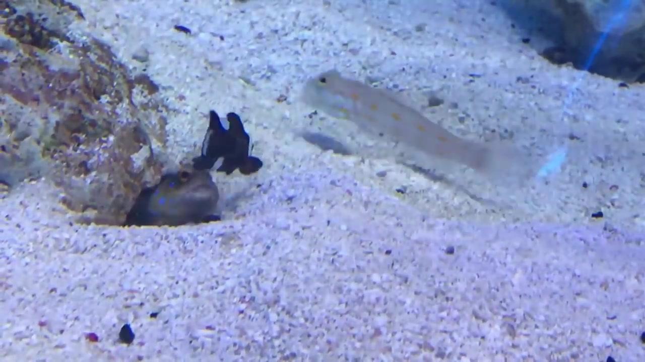 Briga de vizinhos no aquário