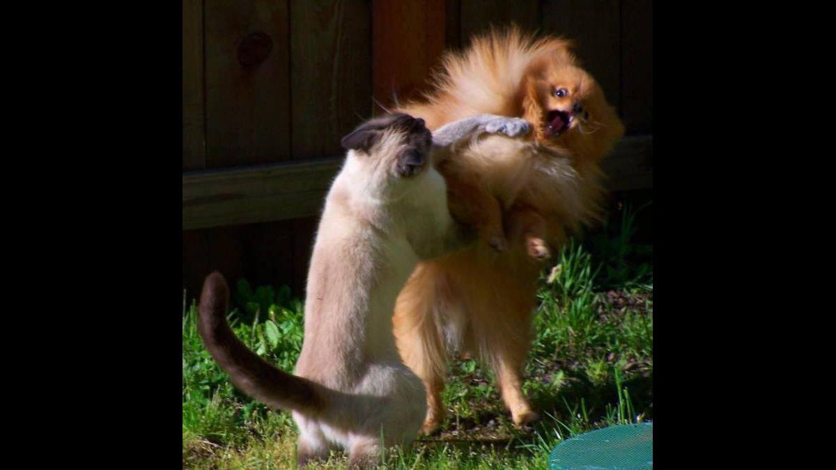 Brigas entre animais mais engraçadinhas que você já viu