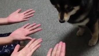 Brincando Com Cachorrinho De Esconder Petisco, Olha Só Como Ele É Fera, Hahaha!