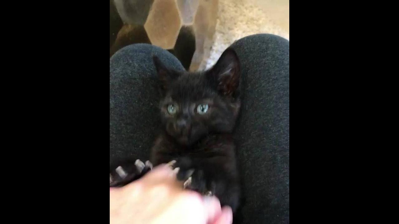 Brincando com filhotinho de gato