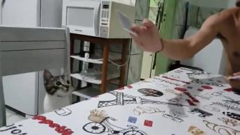 Brincando Com Gatinho Com Carte De Baralho, Veja Que Coisinha Mais Fofa!