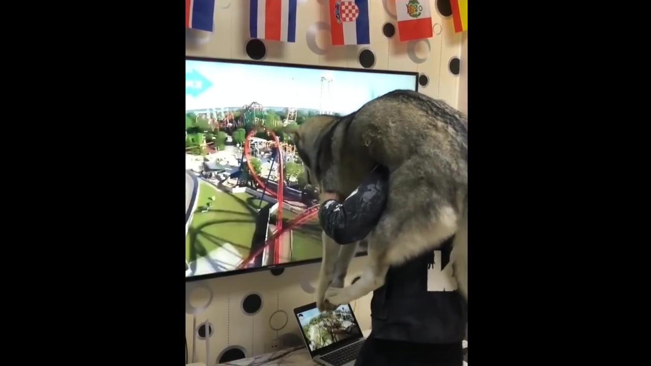 Brincando com o cachorro com montanha-russa virtual