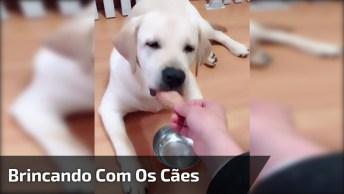 Brincando Com Os Cães, Veja A Reação Deste Amigão De 4 Patas!