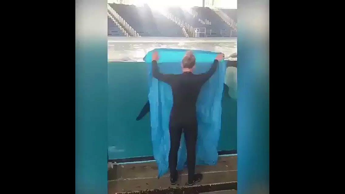 Brincando da modinha de se esconder com baleias