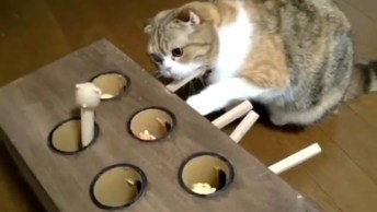 Brinquedo Para Gatinho, Olha Só Como Ele Fica Interagido, Muito Legal!