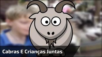 Cabras E Crianças, Uma Combinação Que Faz A Gente Dar Risadas!