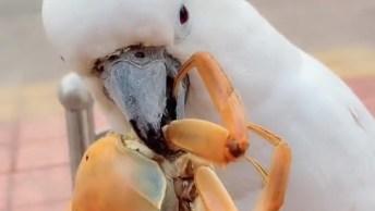 Cacatua Comendo Frutos Do Mar, Veja Como Ela Faz Isso De Forma Rápida!