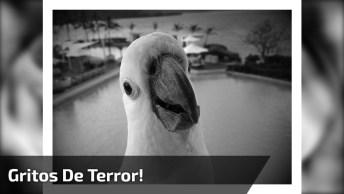 Cacatua Dando Gritos De Terror, Olha Só Como Ela Manda Bem, Hahaha!