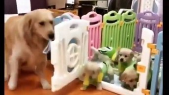 Cachorra Abre O Portãozinho Para Seus Filhotes Sair Para Comer!