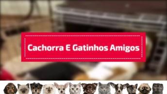 Cachorra Adora Gatinhos Como Seus Filhotes, Veja Que Coisa Mais Fofa!