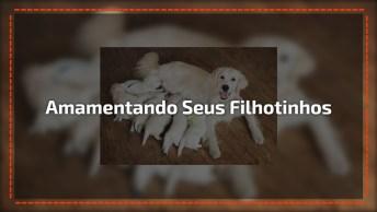 Cachorra Amamentando Seus 10 Filhotinhos, Coitada Desta Mamãe!