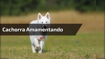 Cachorra Amamentando Seus 12 Filhotes, É Muito Amor Em Um Único Vídeo!