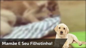 Cachorra Com Maior Cuidado Para Colocar O Filhotinho No Lugar, Olha Só Que Linda