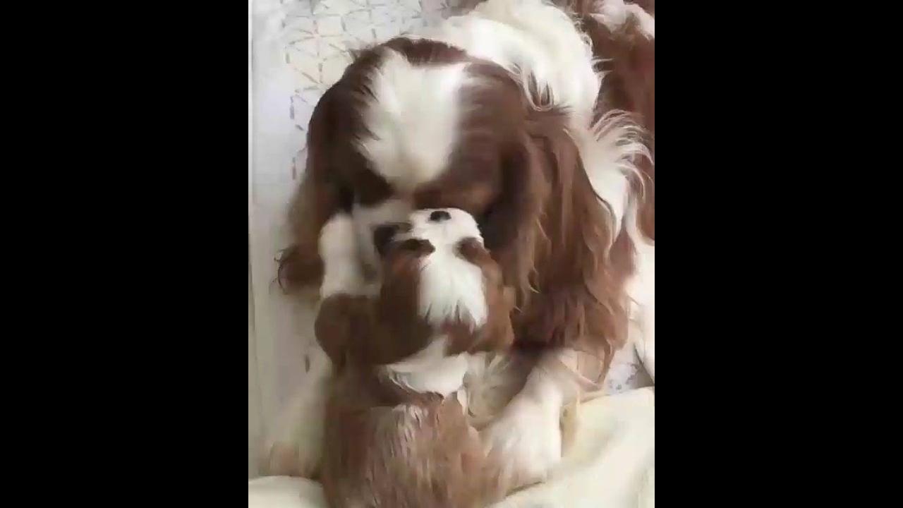 Cachorra com seu filhotinho