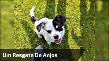 Cachorra Depois De Ter Sido Amarrada Em Um Saco, É Resgatada Com Seus Filhotes!