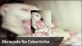 Cachorra Dormindo Abraçada Com Sua Cobertinha, Veja Estas Patinhas Mexendo!