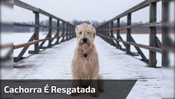 Cachorra É Resgatada Depois De Ser Abandonada A 10 Km Da Cidade!