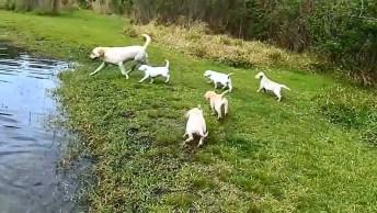 Cachorra Ensinando Seu Filhotinhos A Nadar, Olha Só Que Coisa Mais Linda!