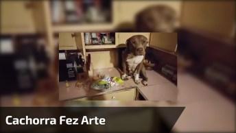 Cachorra Faz Arte E Fica Com Cara De Arrependida, Veja Que Fofura!