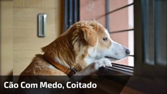 Cachorra Fica Com Medo De Ser Esquecida E Entra No Carro!