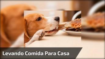 Cachorra Ganha Uma Coxa De Frango E Sai Correndo, Veja Onde Ela Foi Levar!