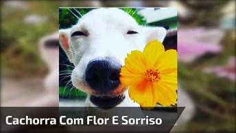 Cachorra Linda Com Sorriso E Flor, Ela É Imagem Mais Linda Do Dia!