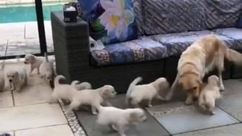 Cachorra Mamãe Brincando De Esconder De Seus Filhotes, Que Fofura!