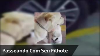 Cachorra Passeando Com Seu Filhote, Olha Só Onde Ele Esta, Hahaha!