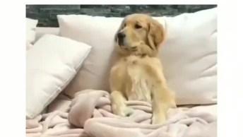 Cachorra Que Ganha Café Na Cama Todos Os Dias, Será Que Ela É Mimada?