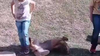 Cachorra Vê Crianças Escorregando E Também Quer Escorregar!