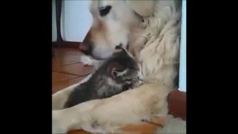 Cachorrinha Adota Gatinho, Olha Só Que Amor! Vale A Pena Conferir!