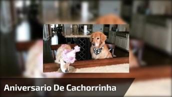 Cachorrinha Comemorando Aniversário, Olha Só A Carinha Do Amigo Do Lado!