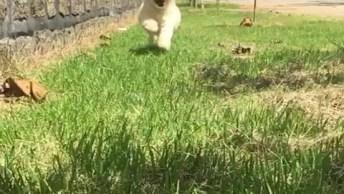 Cachorrinha Correndo Em Câmera Lenta, Olha Só A Carinha Dela!