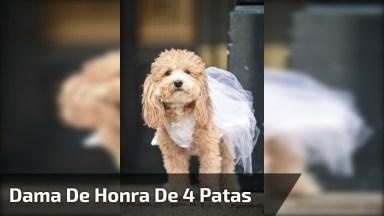 Cachorrinha Dama De Honra, Ela Roubou A Cena Da Noiva!