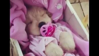 Cachorrinha Dormindo Em Bercinho Como Se Fosse Um Bebê, Que Fofura!