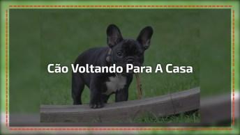 Cachorrinha É Devolvida A Família Após Assalto, Emocionante!