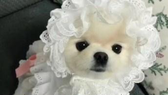 Cachorrinha Eleita A Mais Fofa Do Dia, Que Roupinha Mais Engraçadinha!