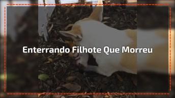 Cachorrinha Enterrando Seu Filhotinho Que Morreu, Coitadinho!