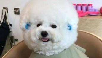 Cachorrinha Esperando O Seu Penteado Ficar Pronto Em Salão!