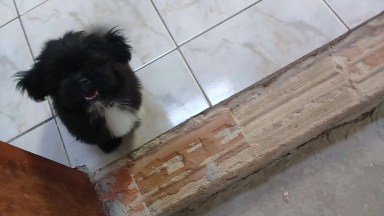 Cachorrinha Feliz Em Ver A Família, Veja Que Fofura De Cão!