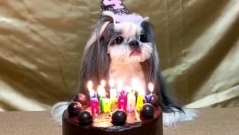 Cachorrinha Ganha Bolo De Aniversário De 4 Anos, Mas Parece Não Se Importar!