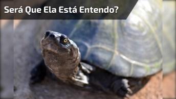 Cachorrinha Invocada Com Tartaruga, Será Que A Tartaruga Está Entendo?