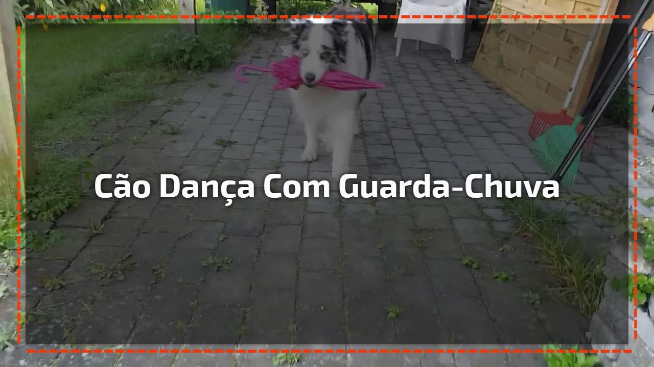 Cão dança com guarda-chuva