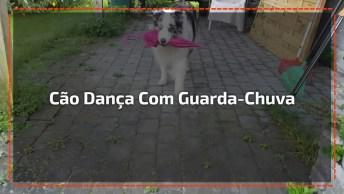 Cachorrinha Linda Dançando Com Guarda-Chuva, Olha Só Que Lindinha!